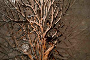 1- Tree of Life P1-B